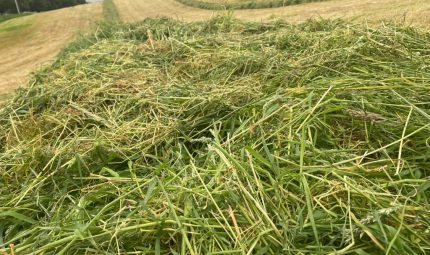 Did first cut silage go to plan?