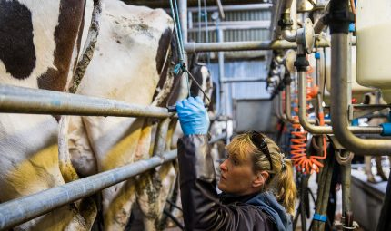 How buffer feeding helped these Irish farmers control costs and maximise herd performance
