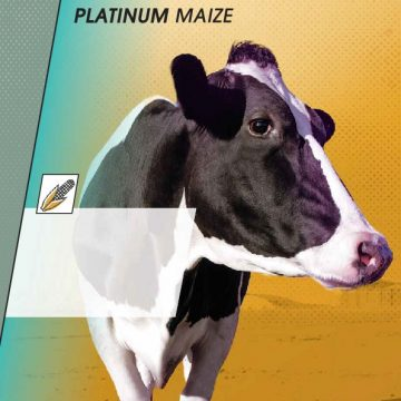 Magniva Platinum Maize
