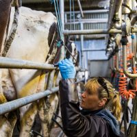 Anne Shanahan milking the families pedigree Holstein cows noticed an immediate increase in milk yield and solids after using Eornagold