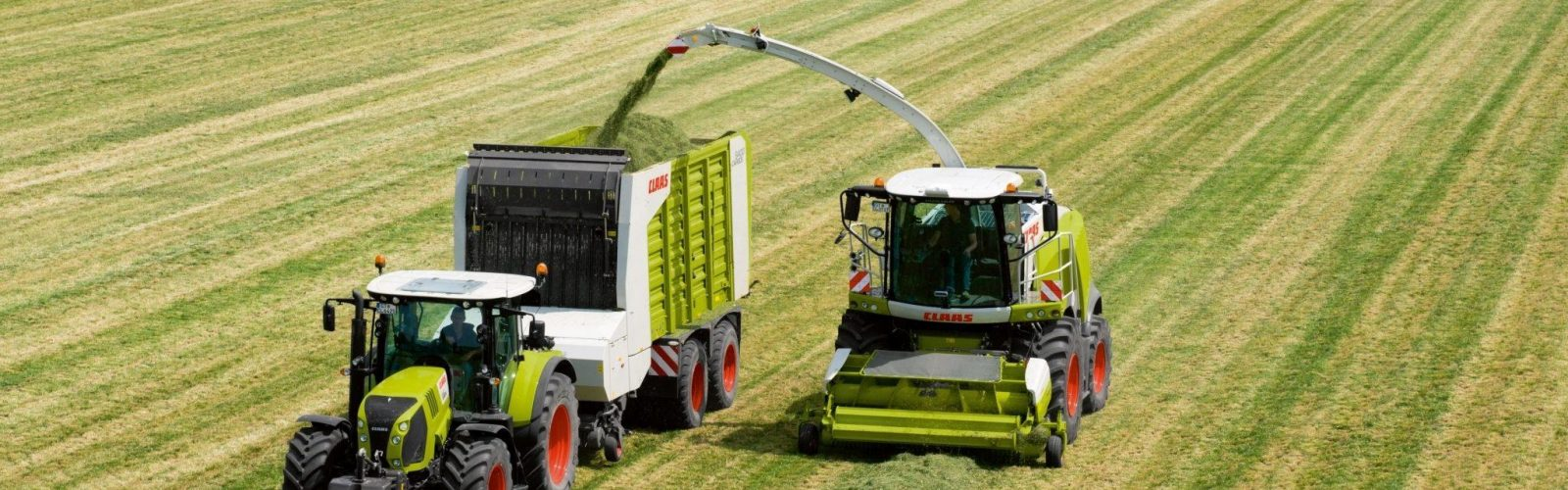 Best grass seed for cutting and grazing on the recommended list