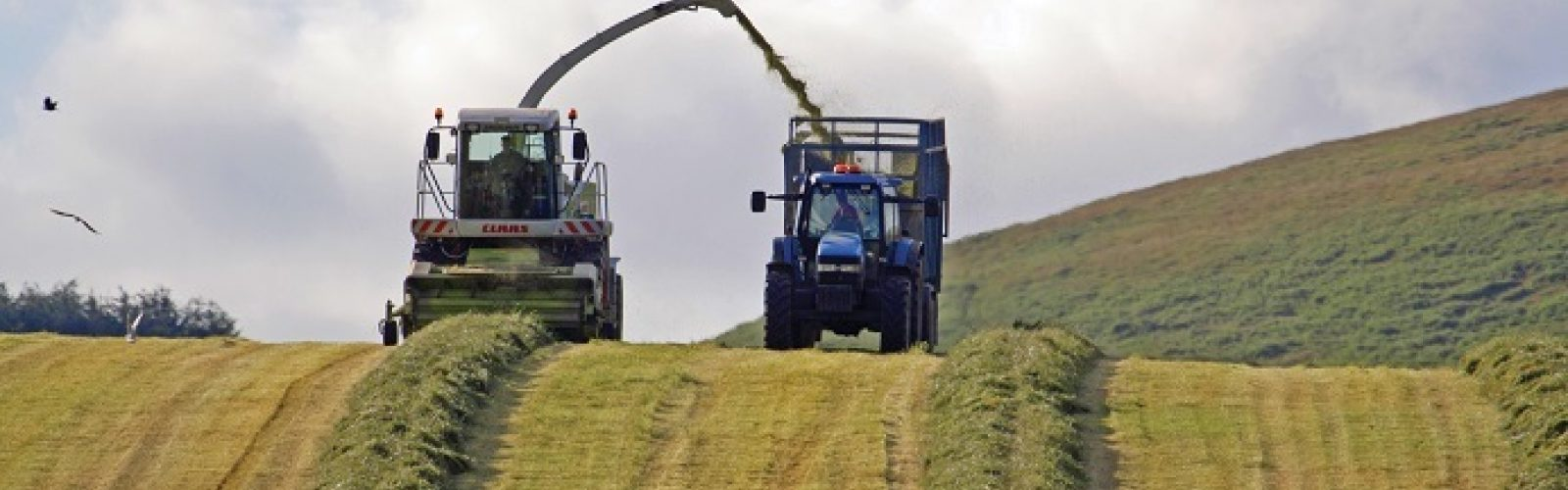 Silage - Improve Feed Value